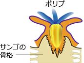 ポリプの図